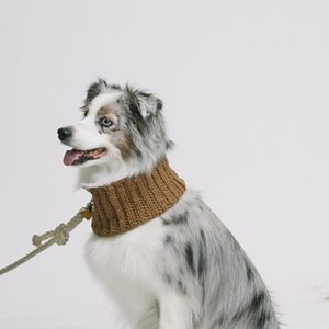 adventure dog cowl