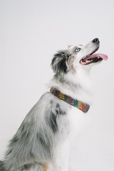 The fhdc stitch can be used to make a fashion statement for your furry friend!