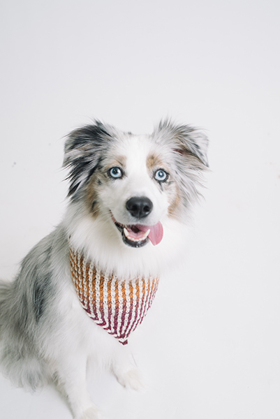 mountain dog bandana